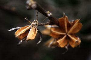 Beauty-of-Nature---Marianna-Poulsen---PM