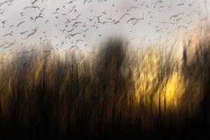 Birds-escaping---Kurt-Staehr---Hedensted-Fotoklub