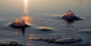 Isblomster---Verner-Jensen---Naestved-Fotoklub