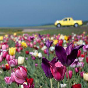 Spring---Kirsten-Bech-Andersen---Fotoklubben-Focus-Silkeborg