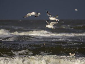 Ib-Corneliussen-Nielsen---Seagulls-and-starfish
