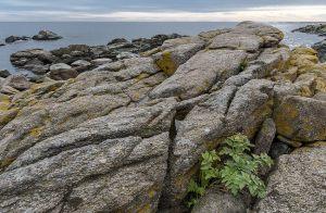 Ida-Refsgaard---Coast-Svaneke