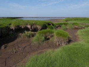 Sren-Skov---The-Wadden-Sea