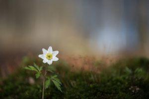 03_Kim_Moeller Andersen_Early-spring