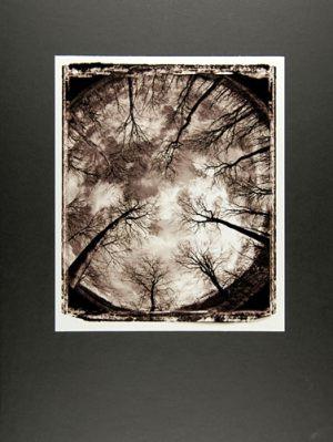 JENS CATO G. ANDERSENA CIRCLE OF TREES