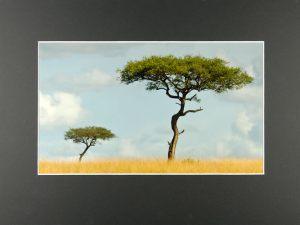 Søren Skov, EFIAP-MSDF2 træer Kenya