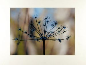 Mona GrundsøeTøsneBedste flora