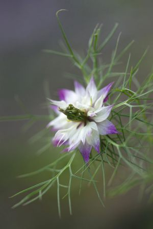 Flower-in-my-garden---Lotte-Christina-Andersen-Pedersen---Esbjerg-Fotoklub