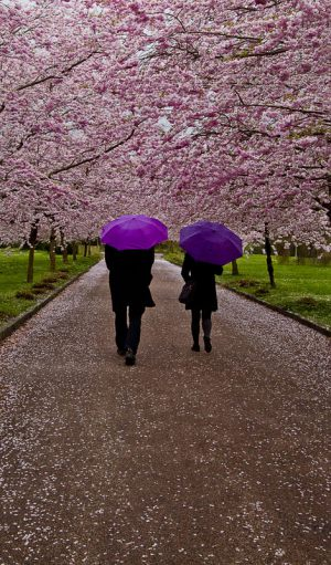 Springtime---Evelyn-Pettersson-Fiig---KFAK