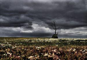 Wind---Ib-Meinhardt-ASDF-AFIAP---Fotolinsen-Silkeborg