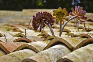 3088_Brian Forsberg_Roof_Tiles_Grows
