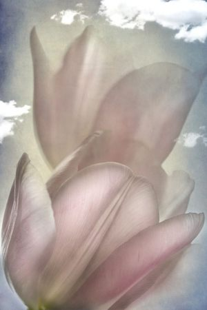4467_Lotte Christina Andersen_Tulips_in_the_sky_1-3