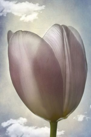 4468_Lotte Christina Andersen_Tulips_in_the_sky_1-3