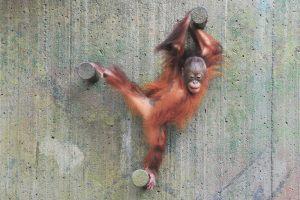 3592-Torben-Bieber-Christensen-En_Zoo-dag_er_en_godag-