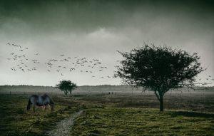 4345-Claus-Carlsen-Landscape_4-