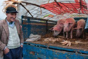 95-Soeren-Skov-Pigs_trades_SSK9303-