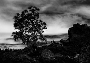 2089-John-Petersen-Tree-