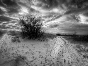 3525-Tage-Klee-Vinter_p_solroed_strand-