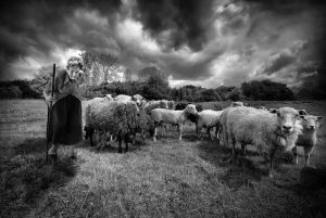 956-Roland-Jensen-Sheep_guardianBW-