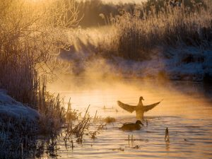 1103-Leif-Alveen-Winter_morning_stream_020-