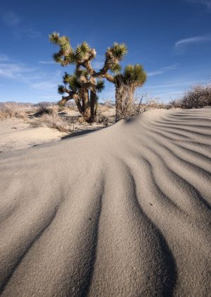 1264-Tom-Pallesen-Sand_Ripples-