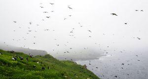 1168-Mogens-Boeggild-Kristensen-fuglene-