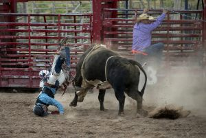 893 Fotograf  Michael Johansen  -  Bull Riding  Diplom Action