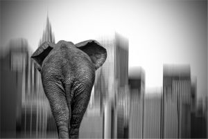 6167 Mariann Jensen Düring     Elephant in New York II BW