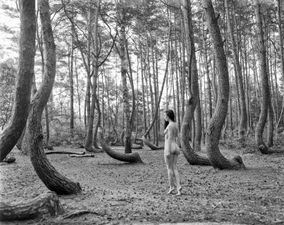 Nymph from the Forrest #2