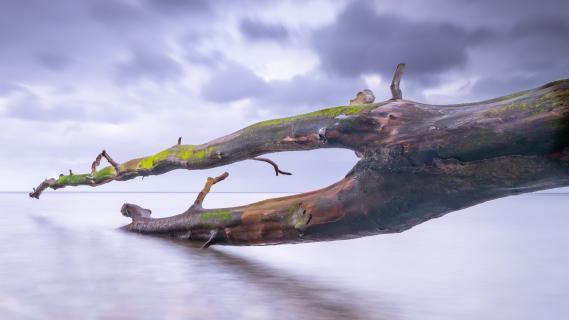 Træ i vand