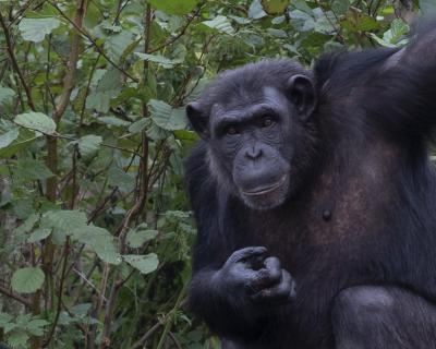 primat portræt.jpg
