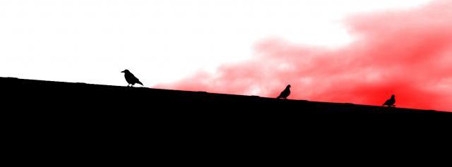 Fugle på rød baggrund af Bruno Japp