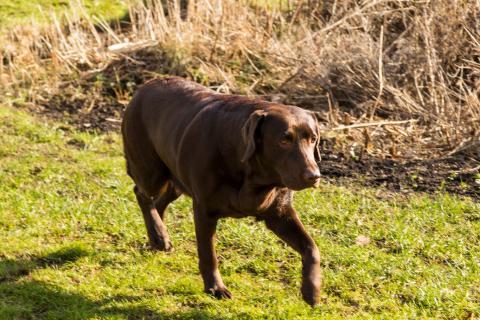 Browndog-1138.jpg