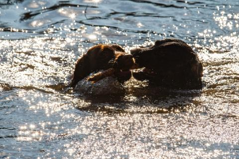 Dogs in water-1098.jpg