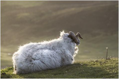 MARIANN_JENSEN_DURING_HEBRIDES SHEEPS VIEW.jpg