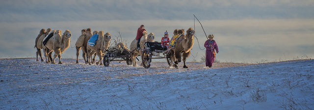 Camel caravan 086Lalveen3.jpg