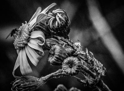 Blomst med flue