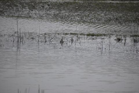 Vandoverfladen i søen