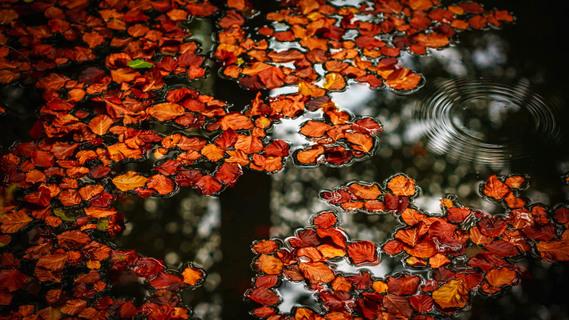 Efterår