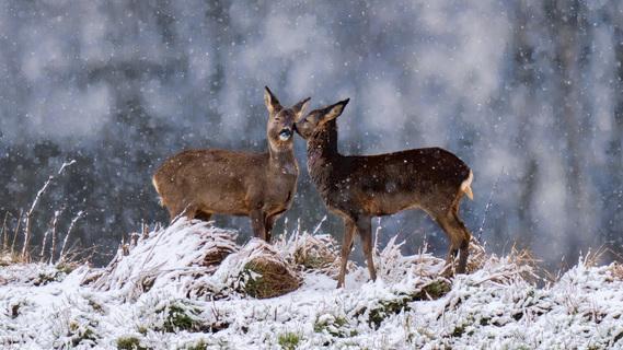 Kys i kulden