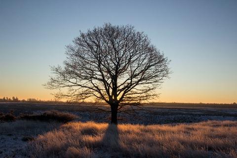 Sol bag træ