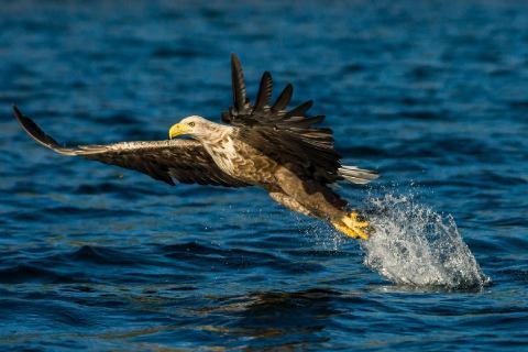 15.450 Eagle.jpg