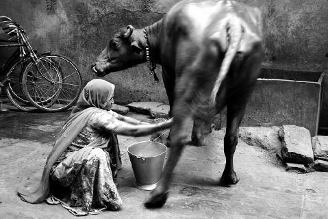 Malkekone - Delhi