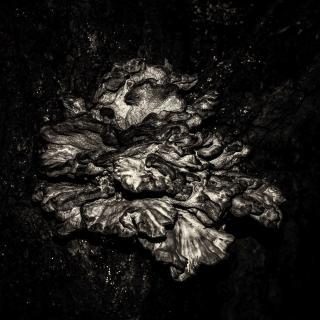 Dark Nature II