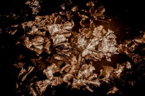 Dark Nature III