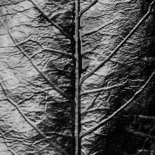 Dark Nature V