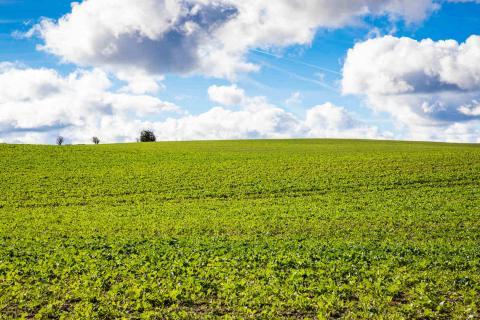Grøn mark